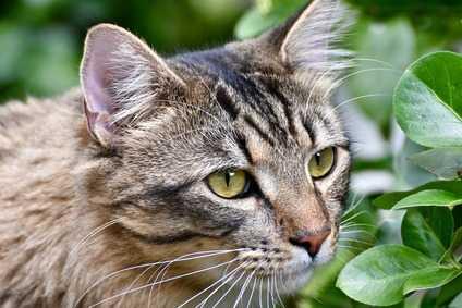 Le cause dell'aggressività: perché i gatti mordono e graffiano?