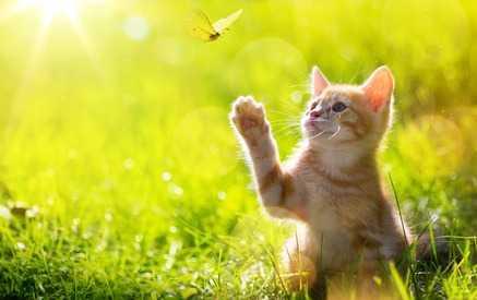 comprendere il linguaggio corporeo dei gatti