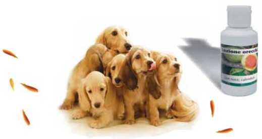 lozione pulizia orecchie cane e gatto