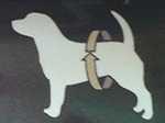 Mutandine igieniche per cani - come prendere la misura