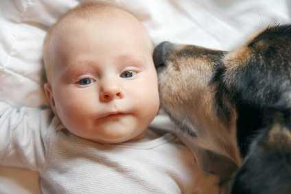 E' consigliabile non lasciare mai soli, senza sorveglianza un cane e bambino piccolo.