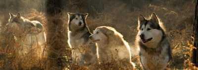 L'alimentazione del cane secondo natura. Il biologicamente appropriato delle crocchette Orijen