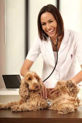 Combattere i parassiti esterni del cane