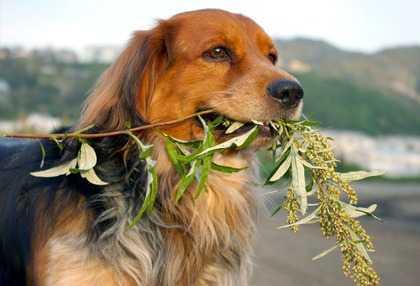 Piante d appartamento velenose per i cani for Piante velenose per i cani