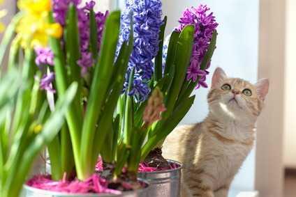 Piante velenose per i gatti che si trovano nelle nostre case for Piante velenose per i gatti