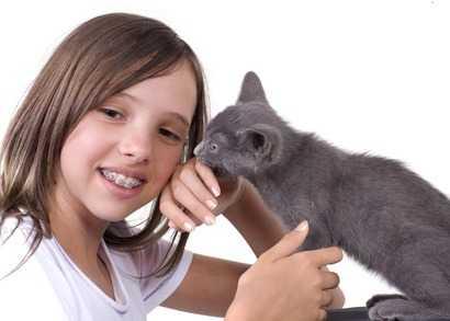 La pulizia delle orecchie del gatto