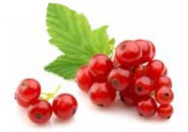cibo umido per gatti naturale Salmone con Ribes Rosso Dalla Grana