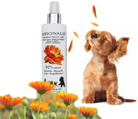 Shampoo a secco Calendula per cani e gatti dalla pelle delicata