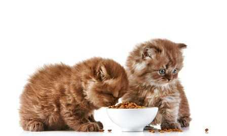 Lo svezzamento dei gattini, come fare