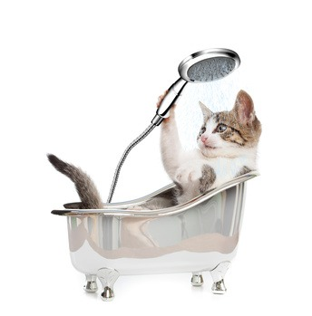 Lavare un gatto: è possibile?