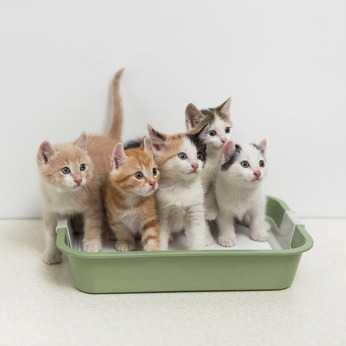 Toilette per gatti: come scegliere la cassetta e la lettiera