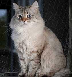 I vantaggi dello sterilizzare un gatto femmina e le alternative