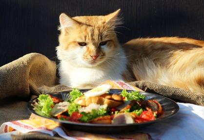 Allergie alimentari del gatto