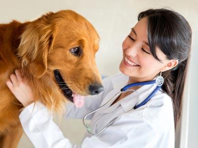 leishmaniosi canina cura