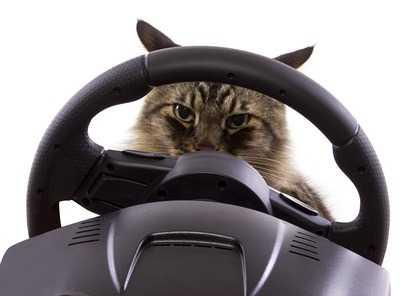 Accorgimenti Prima di partire con il gatto