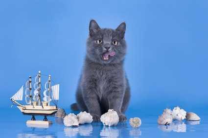 Viaggiare in Nave con il gatto