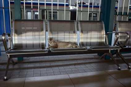 Viaggiare in Treno con il gatto