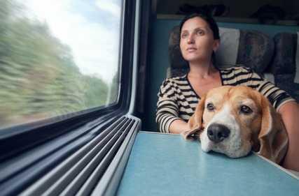 Viaggiare col cane in aereo, auto, treno, nave
