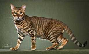 Trainer Personal per gatti con esigenze specifiche