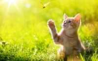 Perché i gatti si allontanano da casa: consigli per non smarrire il proprio gatto