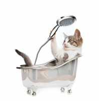 Come curare il pelo del gatto sia lungo che corto, tagliargli le unghie e pulire occhi e orecchie