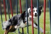 Agility Dog, Frisbee Dog e altri sport da praticare con il cane
