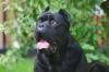 Ipoalbuminemia o ipoproteinemia per un cane di 7 anni