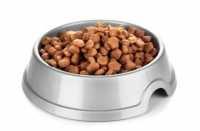 Consiglio per cane con intolleranza alimentare