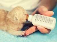 L'alimentazione del gatto nelle varie fasi della vita