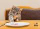 Novità le crocchette Trainer per gatti adulti o sterilizzati in sacchi da 12,5 Kg