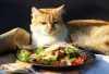 L'alimentazione del gatto: cucciolo e adulto, sterilizzato o che vive in casa, i problemi dei boli di pelo