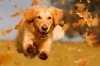 I problemi gastro intestinali del cane e la cura con le crocchette Farmina Vet Life Gastrointestinal