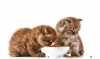 Gli alimenti secchi per gatti cuccioli, adulti e senior della linea Prolife