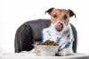 Quanti pasti al giorno per il cane?