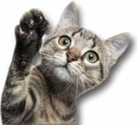 Adozione di un gatto randagio con problema ad un occhio