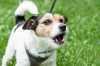 Cane che abbaia troppo: come insegnare al cane a non abbaiare