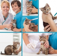 Gatto con ascesso di difficile guarigione