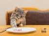 Come agisce l'integrazione naturale Prolife nel supportare le funzionalità dell'apparato digerente del gatto