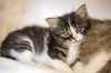 17 Febbraio Festa del Gatto: origini, curiosità ed eventi della giornata del gatto