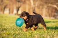 L'alimentazione olistica nel cane, cosa è, come seguirla