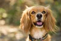 Problemi alla prostata per un cane