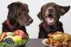 Cane anziano con problema pancreatico