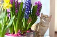 Un concentrato di carne nell'umido per gatti Prolife