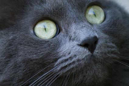 acari orecchie gatto rimedi naturali