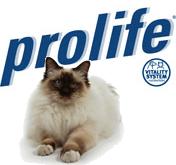 croccantini Prolife gatto