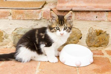 Le allergie alimentari del gatto