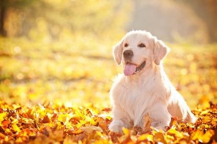 cane che starnutisce
