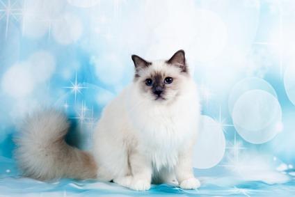 Farmina N&D Quinoa gatto, crocchette per ogni esigenza di benessere