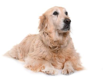 insufficienza renale nel cane