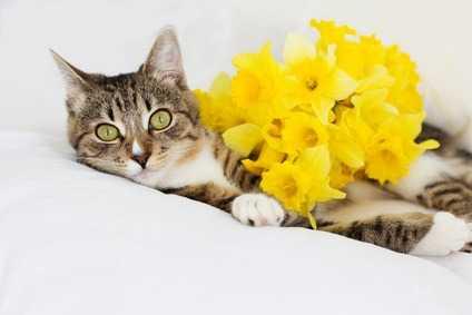Il gatto, carnivoro per eccellenza